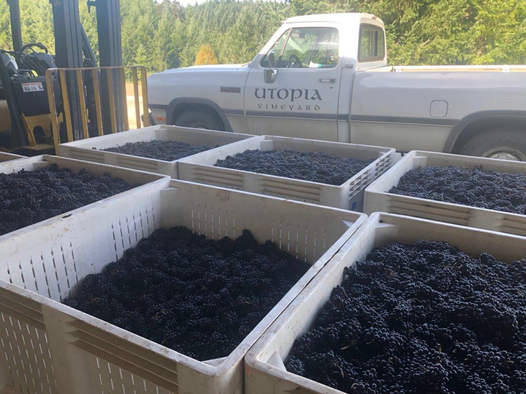 bins of grapes